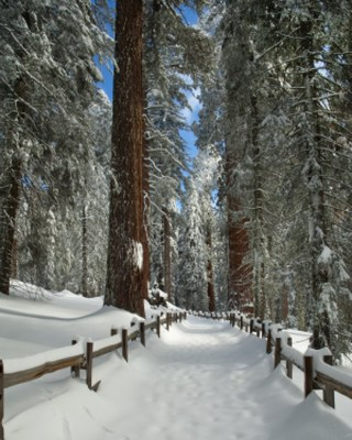 Snow at Sequoia National Park, near Visalia, California. Photo by Larry Lewis used with permission